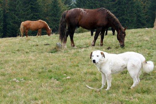 Transportera hästar och hundar